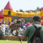 Countryside Hawking at St Ewe Country Fair