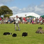 Working Sheep Dogs at St Ewe Country Fair