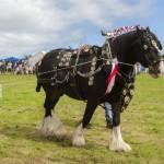 St Ewe Country Fair